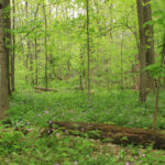 Early Summer Nature & Woodland Ecology Hike